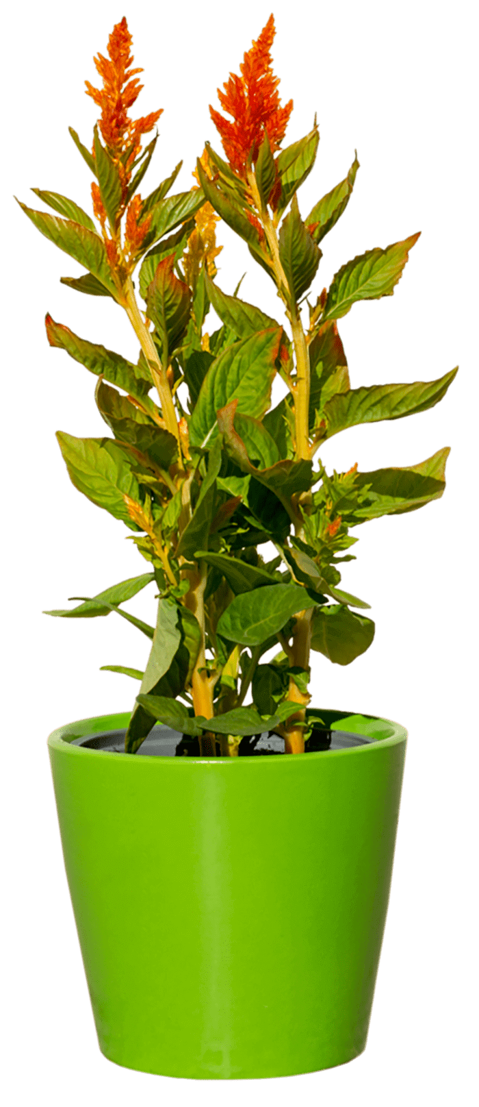 plantas como decoracion